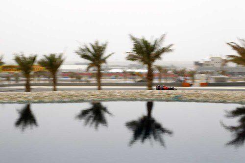 Las palmeras de Baréin