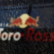 Toro Rosso mojado