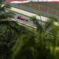 Glock entre palmeras en Sepang