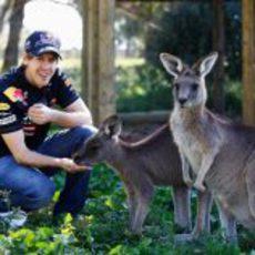 Vettel posa con unos canguros