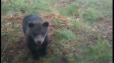 Kovalainen visita a una familia de osos