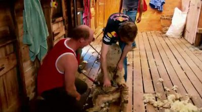 Vettel esquila una oveja en Australia